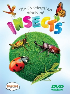 Fascinating World of Insects