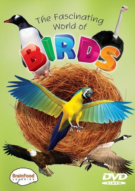 birds_front_500__46168.1322240558.1280.1280